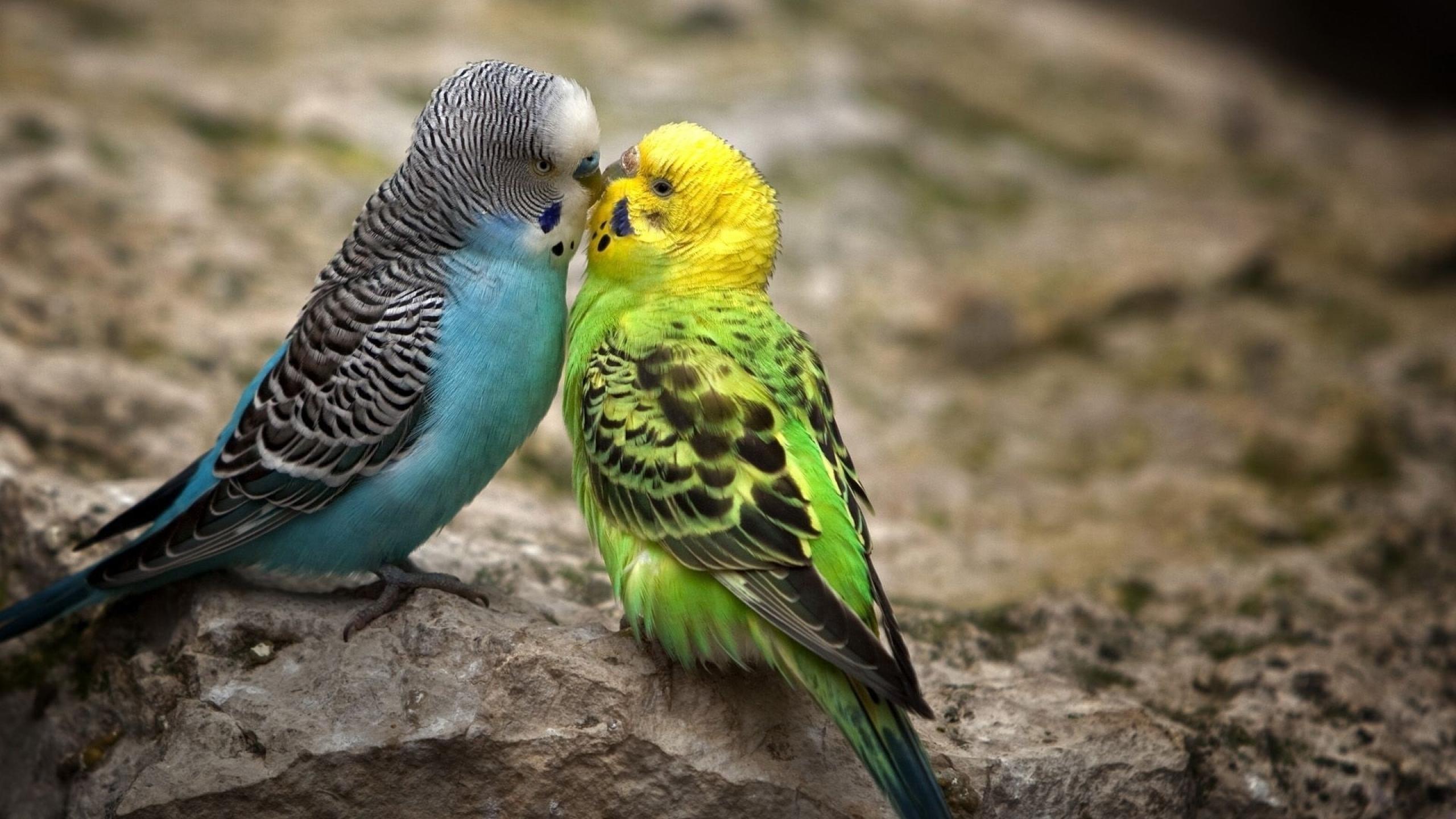 بالصور عصافير الزينة , هذه روائع الصور لعصافير الزينه 2859 11