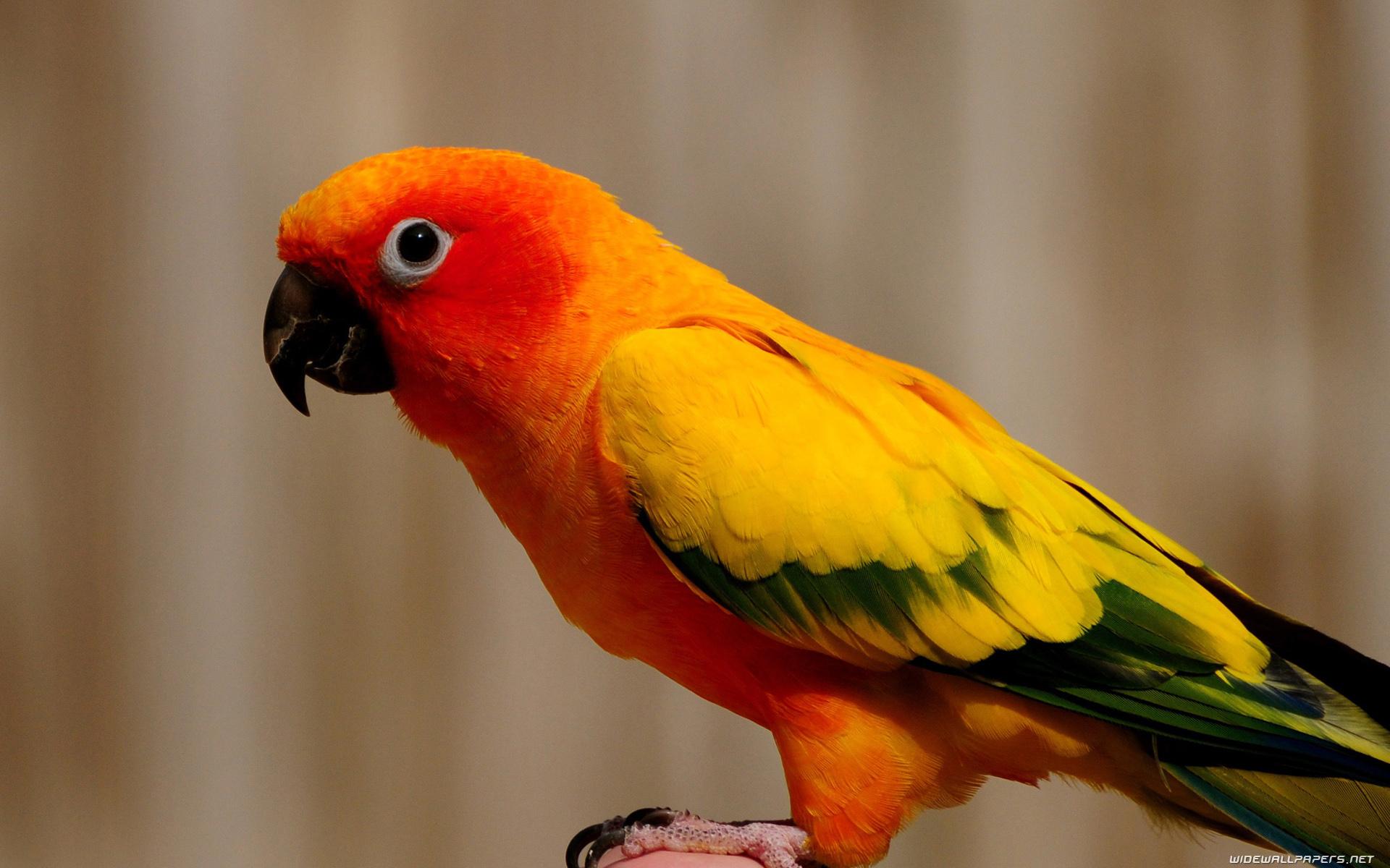 بالصور عصافير الزينة , هذه روائع الصور لعصافير الزينه 2859 5