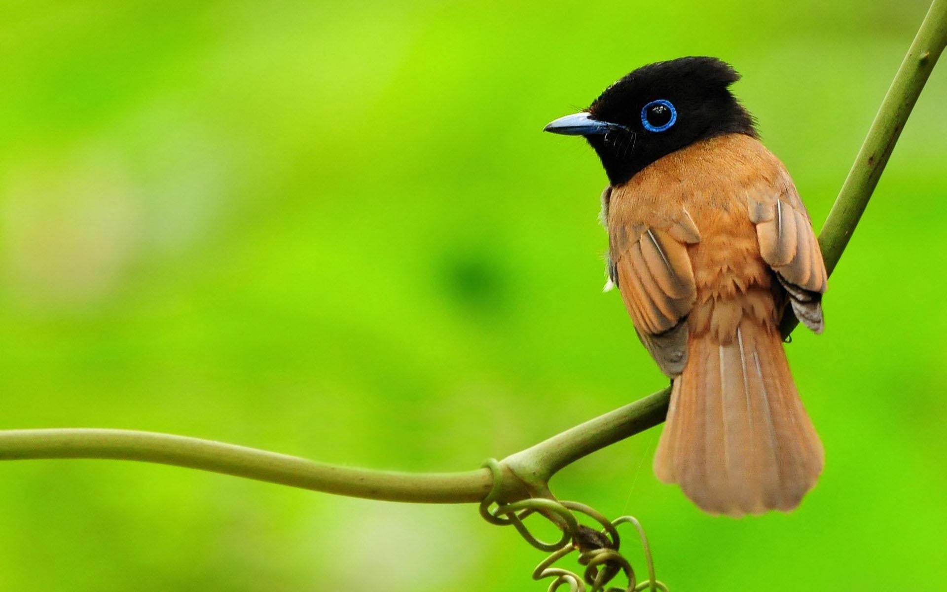بالصور عصافير الزينة , هذه روائع الصور لعصافير الزينه 2859 7