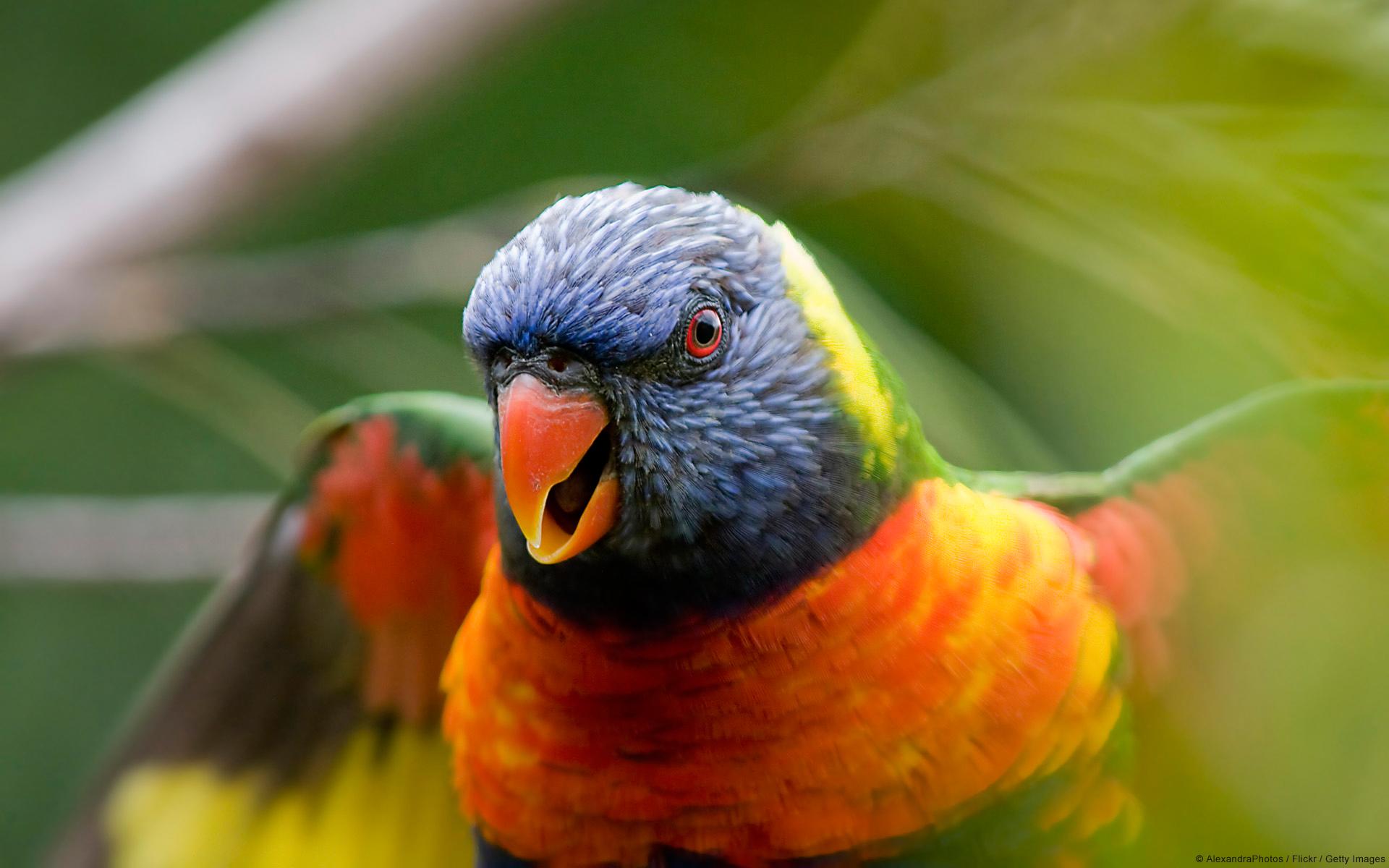 بالصور عصافير الزينة , هذه روائع الصور لعصافير الزينه 2859 8