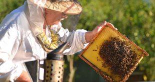 تربية النحل , كيفيه تربيه و مشاهده مناحل النحل