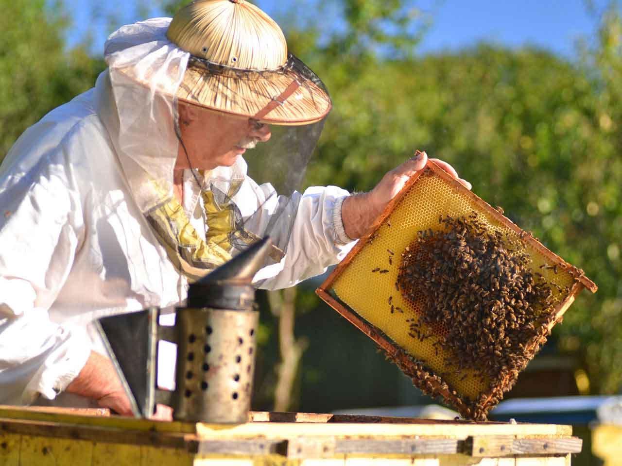 صورة تربية النحل , كيفيه تربيه و مشاهده مناحل النحل