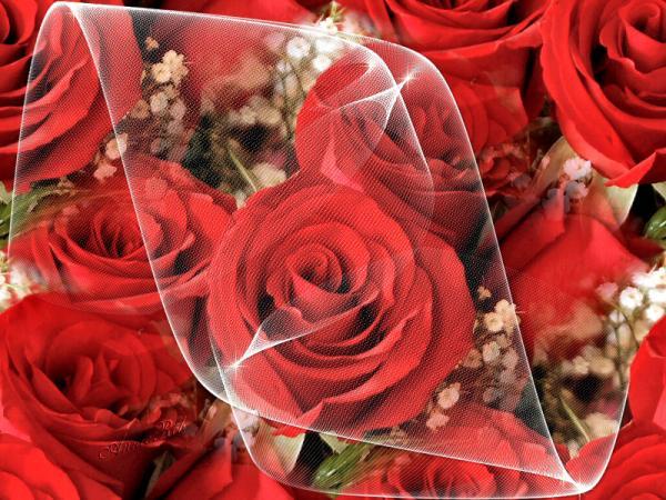 صوره صور الورد , الورد باجمل اشكاله بالصور