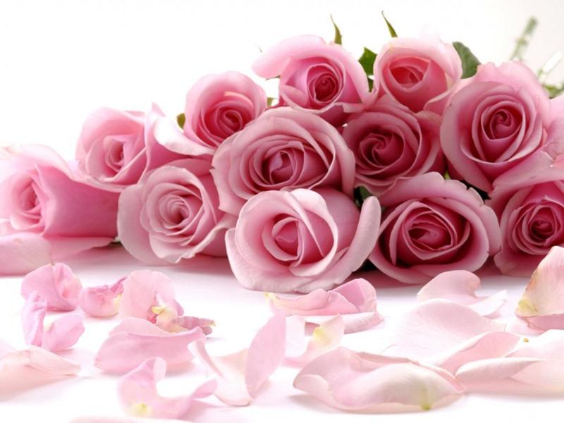 صور صور زهور , الصور الجميله للزهور العطره