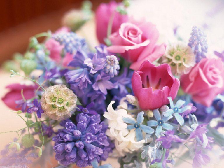بالصور صور زهور , الصور الجميله للزهور العطره 3574 10