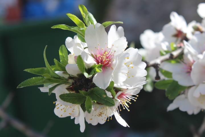 بالصور صور زهور , الصور الجميله للزهور العطره 3574 11