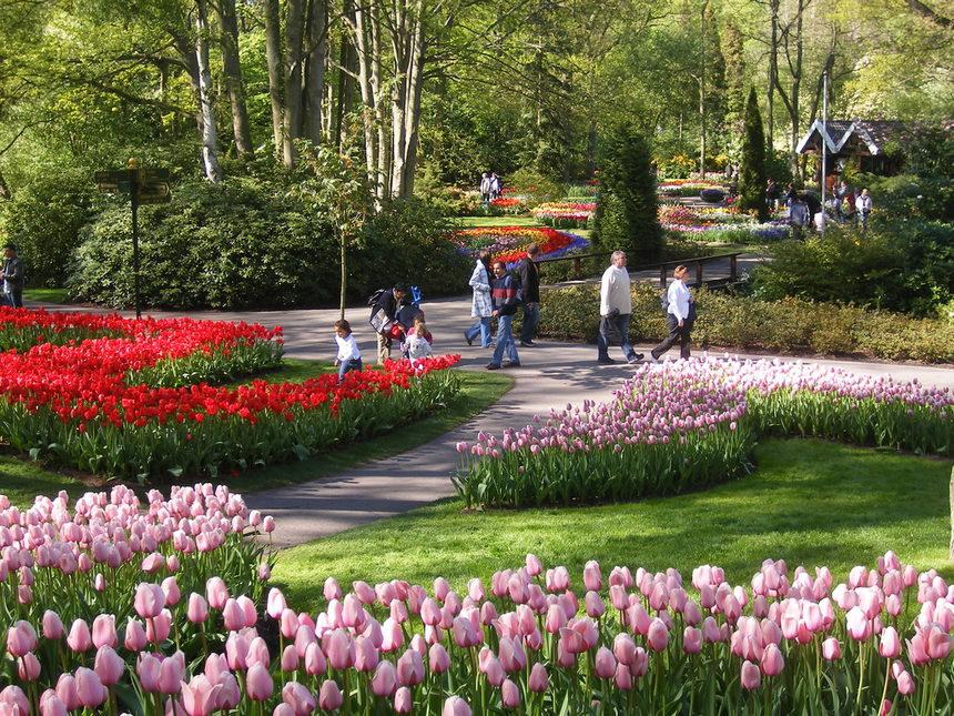 بالصور صور زهور , الصور الجميله للزهور العطره 3574 14