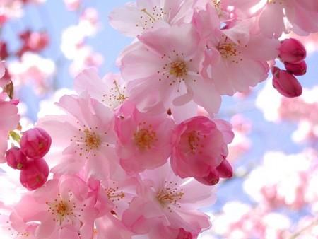 بالصور صور زهور , الصور الجميله للزهور العطره 3574 3