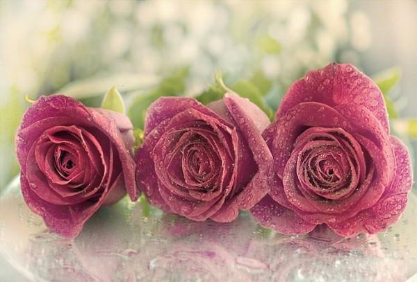 بالصور صور زهور , الصور الجميله للزهور العطره 3574 4