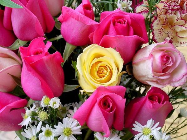 بالصور صور زهور , الصور الجميله للزهور العطره 3574 9