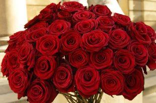 بالصور باقات ورود , اشيك باقات الورود 3655 11 310x205