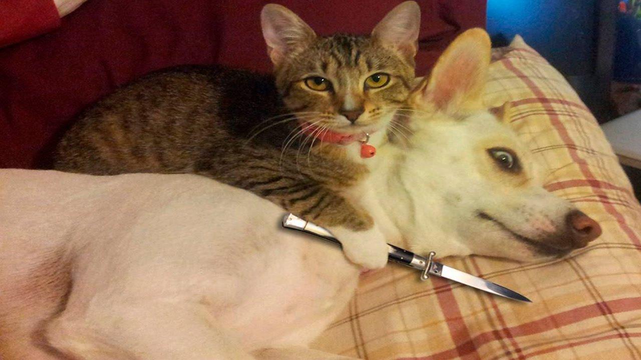 بالصور صور قطط جميلة , بالصور اجمل قطط فى العالم 3725 2