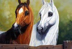بالصور صور خيول , اجدد صور للخيل 4447 10 242x165