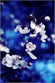بالصور صور فيس بوك شخصيه , صور جميلة للفيس 4688 3