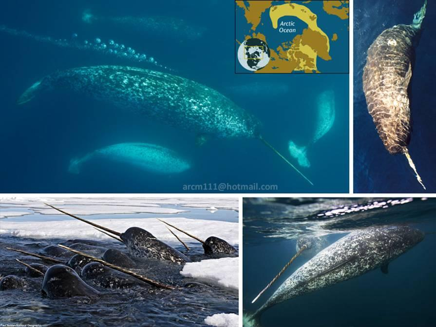 بالصور عجائب البحر , اجمل صور لعجائب البحر 4689 11