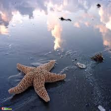 بالصور عجائب البحر , اجمل صور لعجائب البحر 4689 6