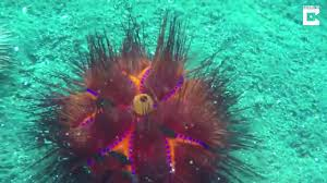 بالصور عجائب البحر , اجمل صور لعجائب البحر 4689