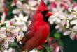 بالصور صور طيور , اجمل الطيور حول العالم 5348 1 110x75