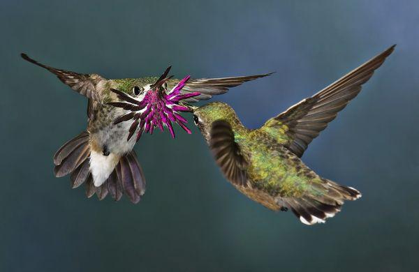بالصور صور طيور , اجمل الطيور حول العالم 5348 1