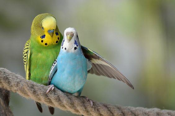 بالصور صور طيور , اجمل الطيور حول العالم 5348 2