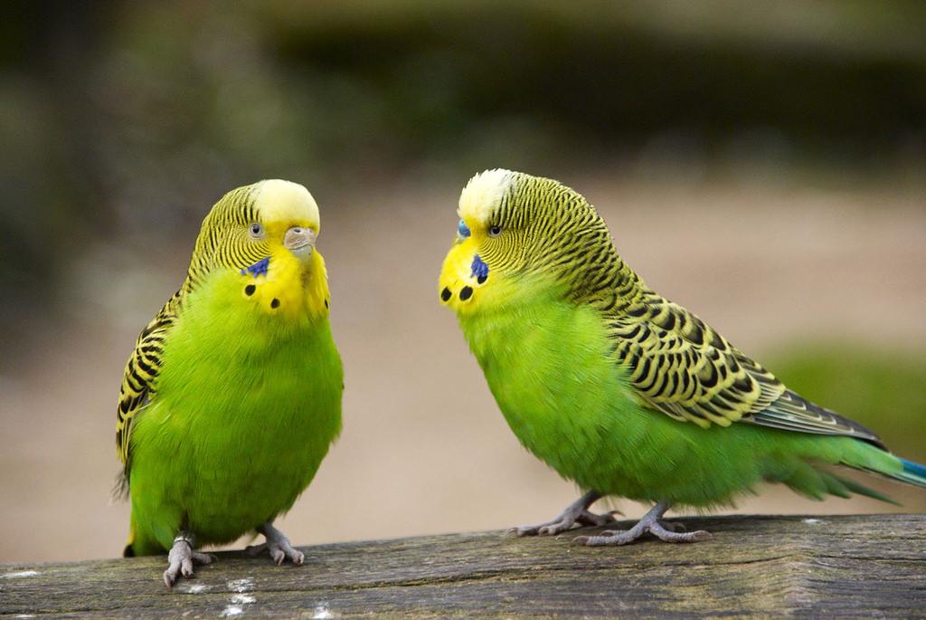 بالصور صور طيور , اجمل الطيور حول العالم 5348 3