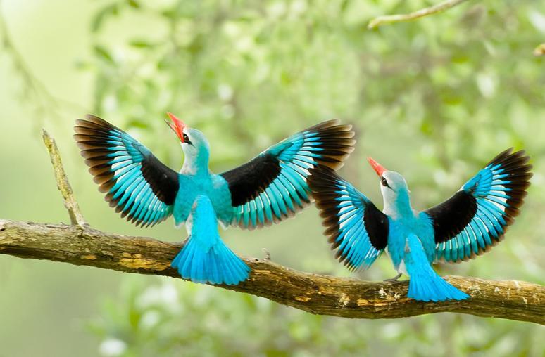 بالصور صور طيور , اجمل الطيور حول العالم 5348 5