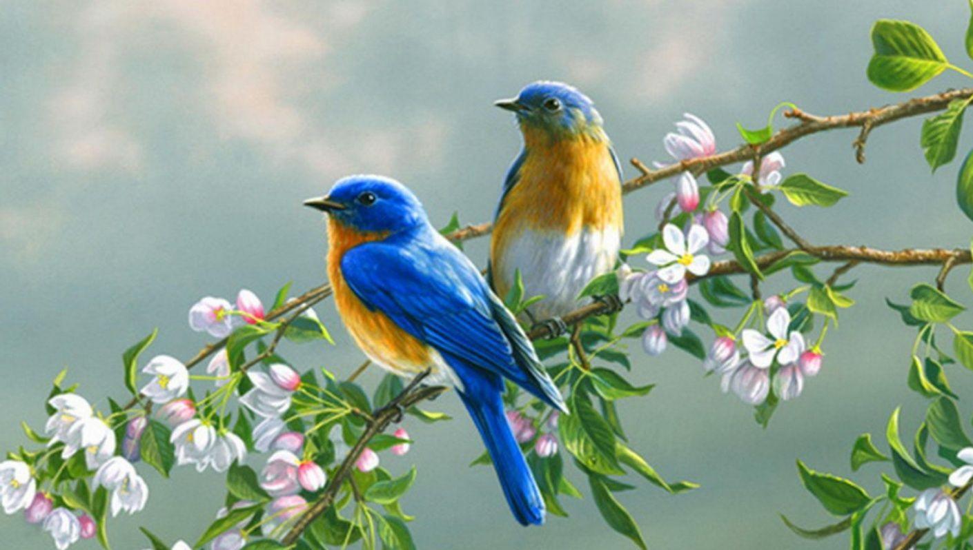 بالصور صور طيور , اجمل الطيور حول العالم 5348 6