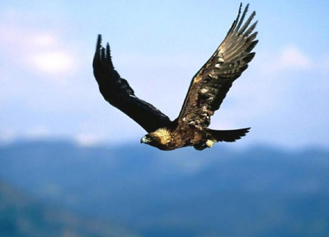 بالصور صور طيور , اجمل الطيور حول العالم 5348 7
