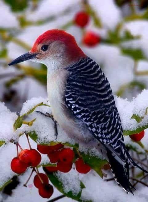 بالصور صور طيور , اجمل الطيور حول العالم 5348 8