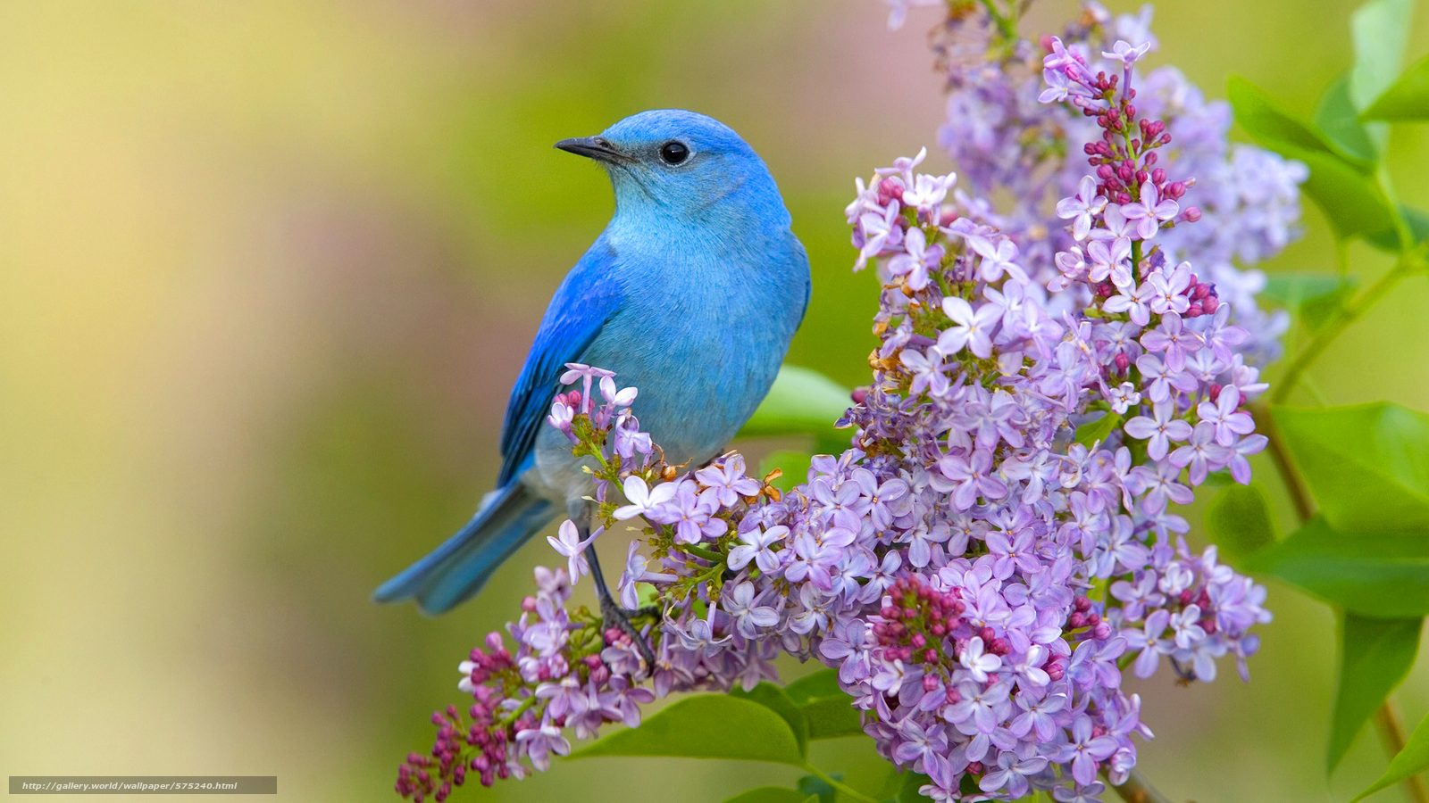 بالصور صور طيور , اجمل الطيور حول العالم 5348 9