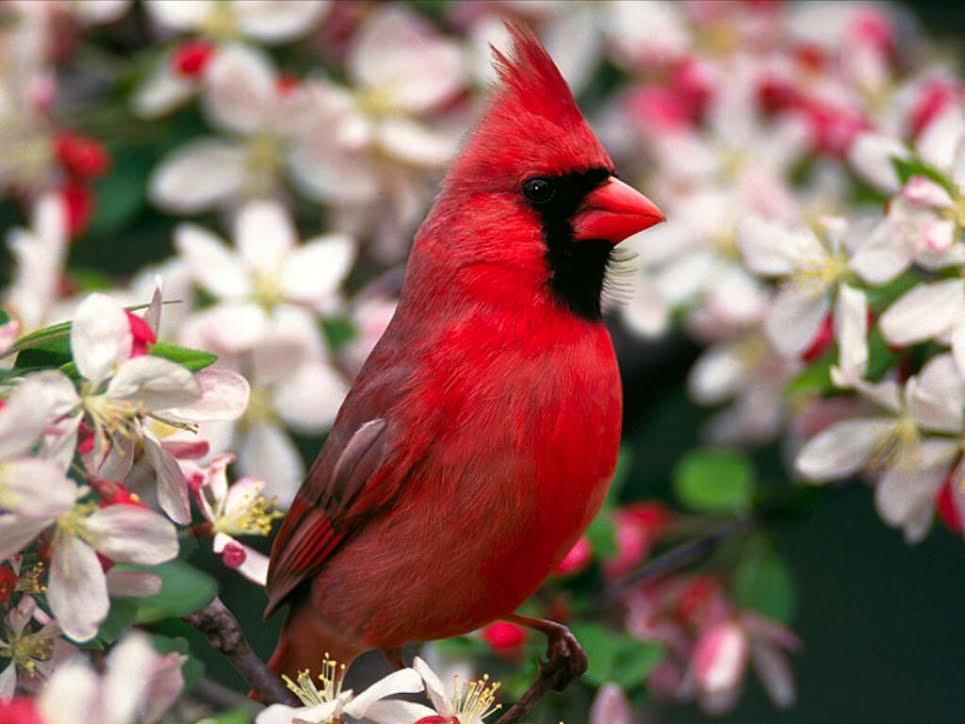 بالصور صور طيور , اجمل الطيور حول العالم 5348