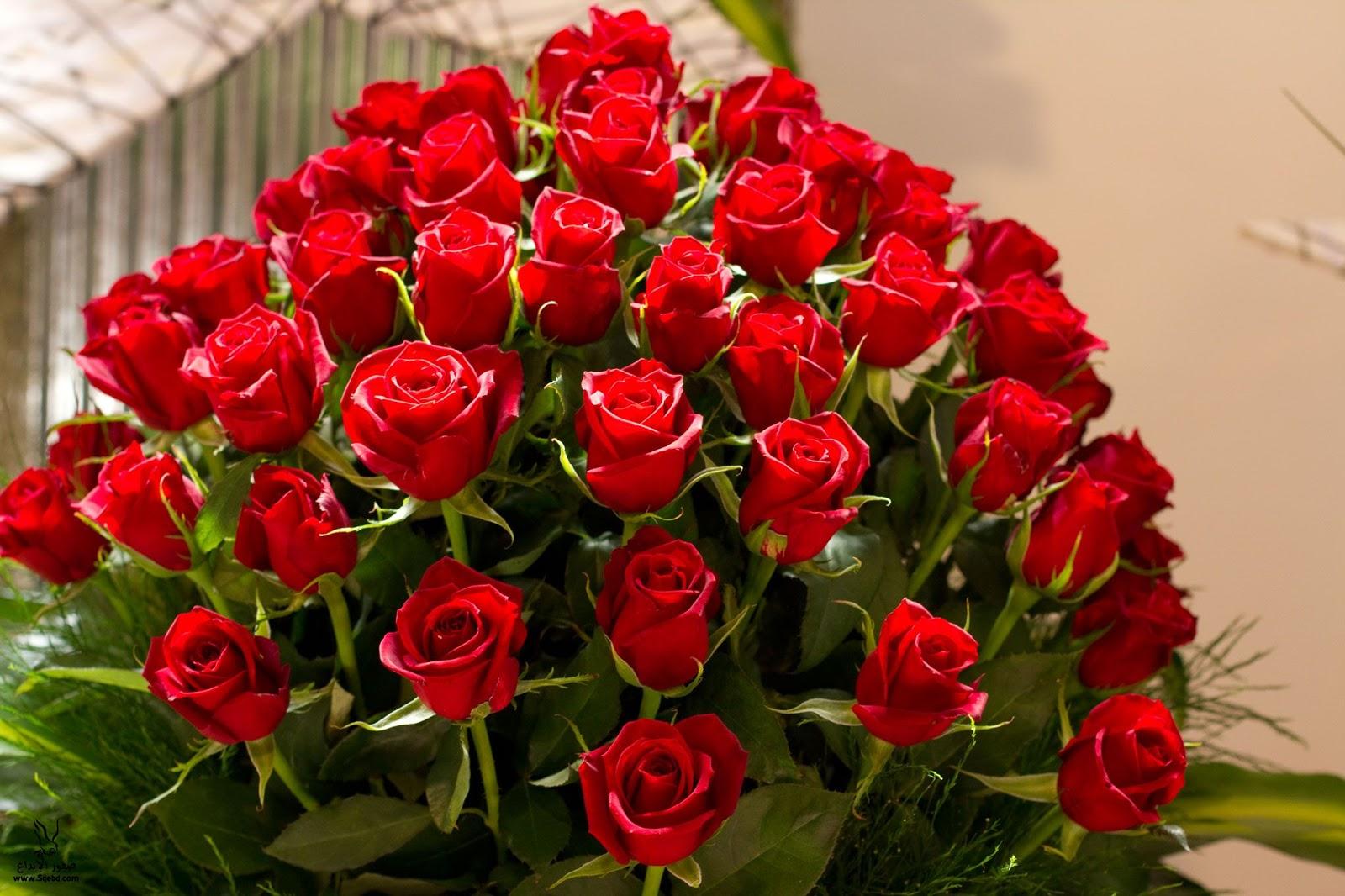 بالصور ورود رومانسية , اجمل باقة ورد رومانسية 5468 5