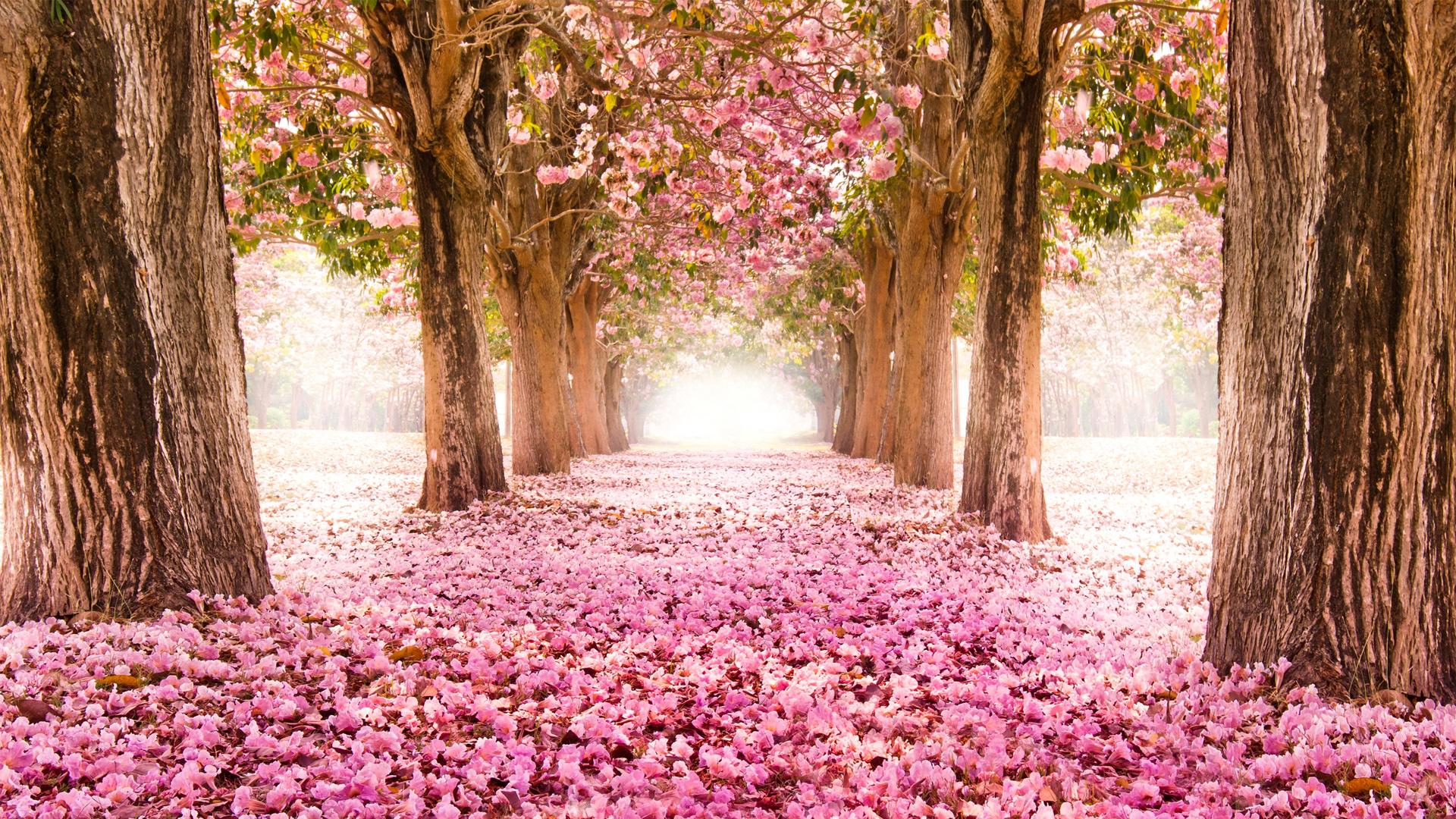 بالصور اجمل وردة في العالم , صور جديدة لاجمل وردة فى العالم 5548 1