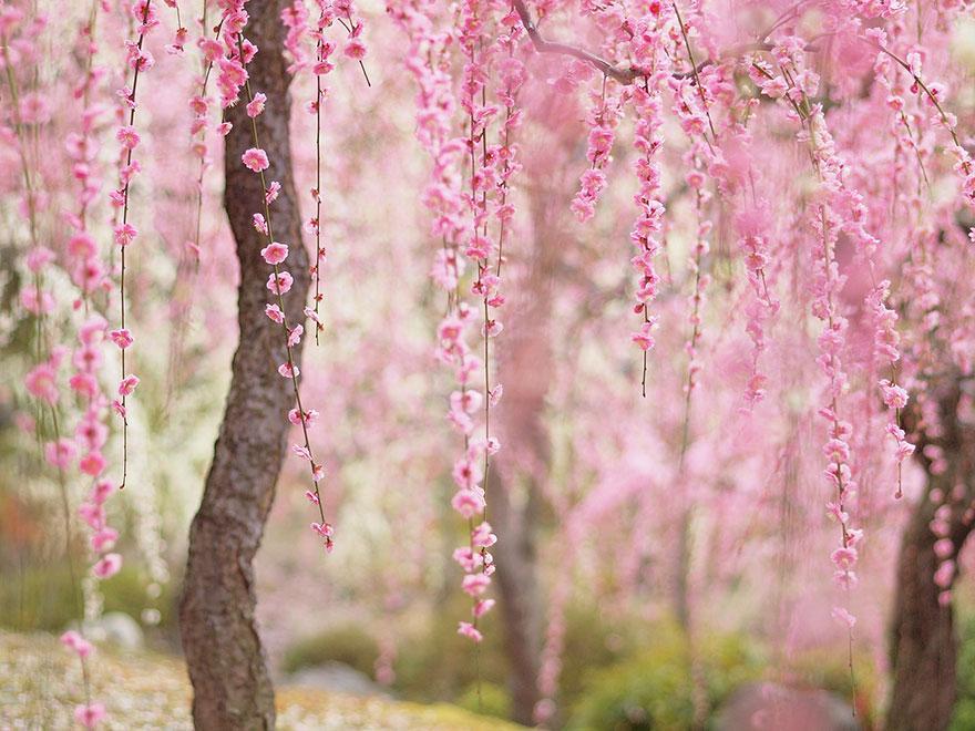 بالصور اجمل وردة في العالم , صور جديدة لاجمل وردة فى العالم 5548 2