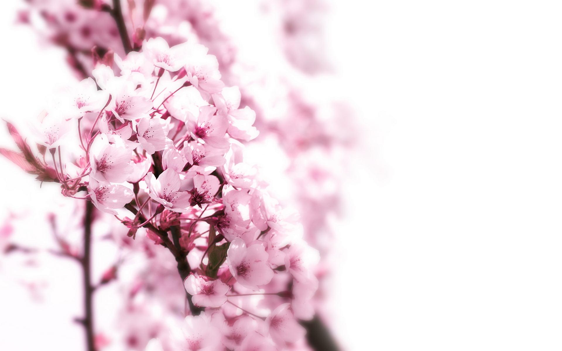 بالصور اجمل وردة في العالم , صور جديدة لاجمل وردة فى العالم 5548