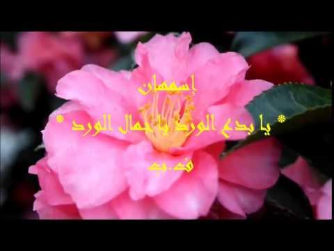 بالصور عبارات عن الورد , ارق الكلام عن الورود ذات الرائحة الروعة 244 10
