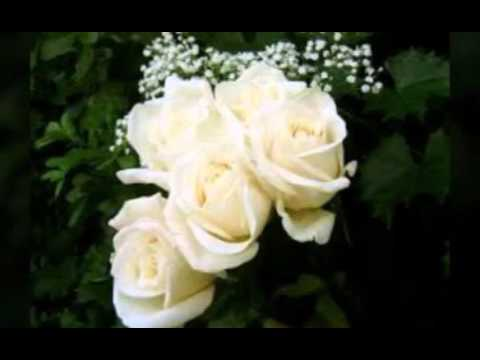 بالصور عبارات عن الورد , ارق الكلام عن الورود ذات الرائحة الروعة 244 4