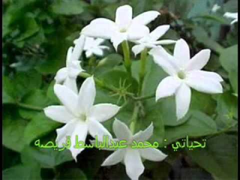 بالصور عبارات عن الورد , ارق الكلام عن الورود ذات الرائحة الروعة 244 5