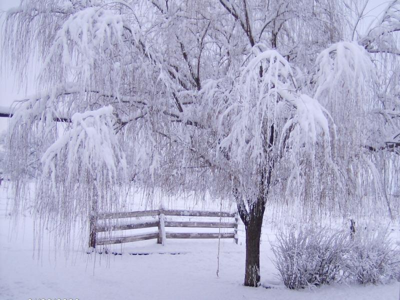 بالصور صور عن الشتاء , اروع صور للشتاء امطار و ثلوج 2933 3