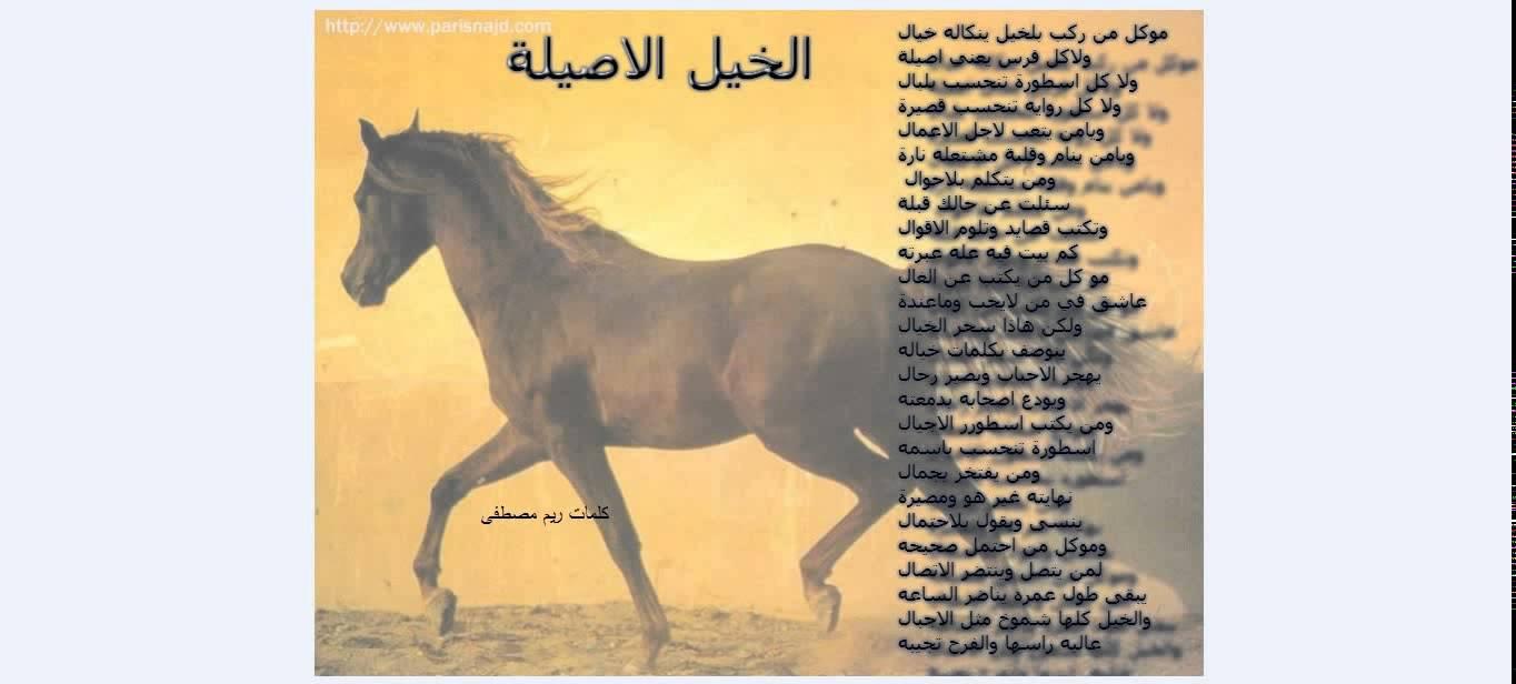صوره زمن الخيول البيضاء , اجمل الخيول الجميلة الروعة