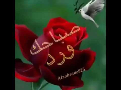 بالصور صباح الورد حبيبي , اجمل العبارات والكلمات فى الصباح 341 11