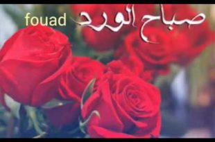 صورة صباح الورد حبيبي , اجمل العبارات والكلمات فى الصباح