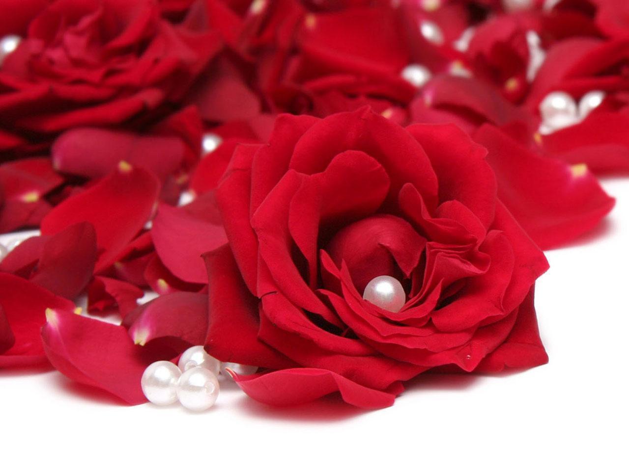 صورة صور ورد صور ورد , اجمل صور الورد الجميل 3709 2
