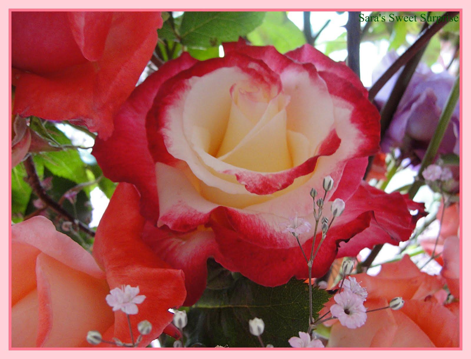 صورة صور ورد صور ورد , اجمل صور الورد الجميل 3709 3