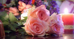 بالصور اجمل ورود في العالم , اجمل ازهار فى العالم 3711 14 310x165