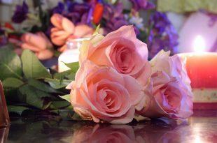 صوره اجمل ورود في العالم , اجمل ازهار فى العالم