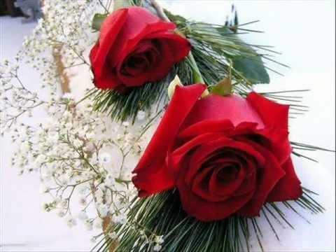 بالصور اجمل الورود في العالم , اروع الهدايا المقدمة لشخص ما 416 1