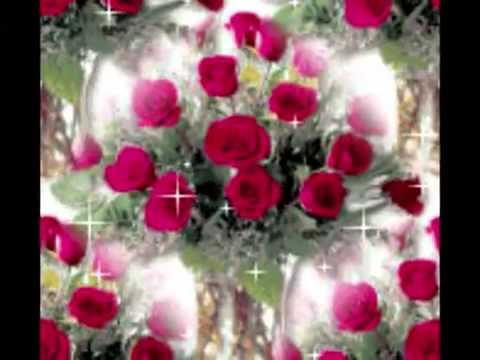 بالصور اجمل الورود في العالم , اروع الهدايا المقدمة لشخص ما 416 11