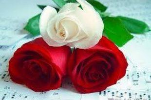 صورة اجمل الورود في العالم , اروع الهدايا المقدمة لشخص ما