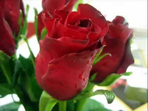 بالصور اجمل الورود في العالم , اروع الهدايا المقدمة لشخص ما 416 2